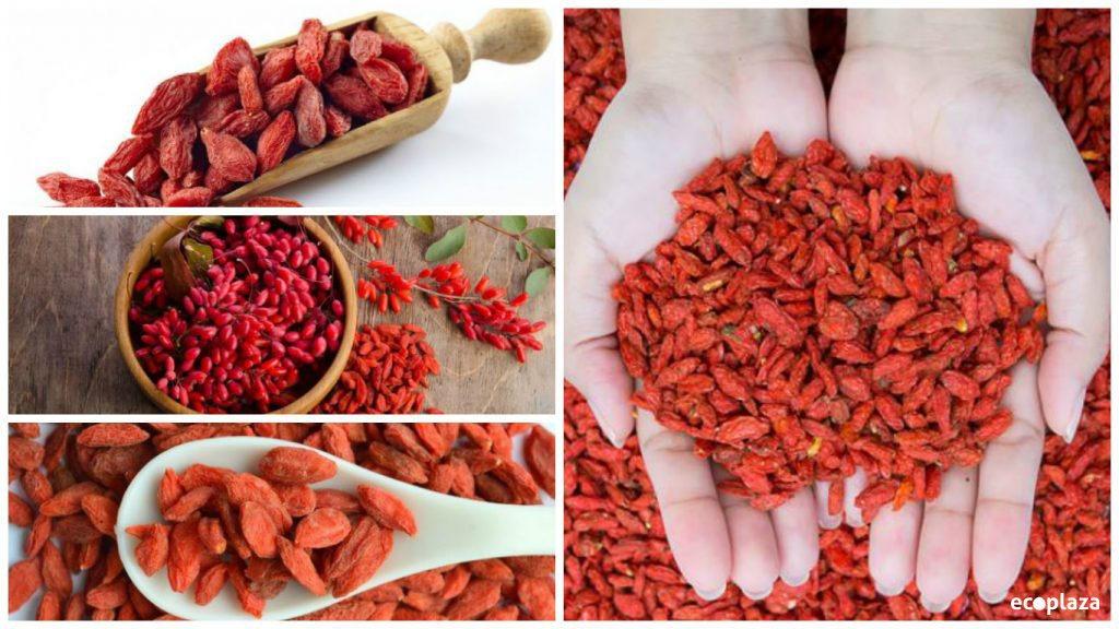 Bayas de Goji, la fruta del Himalaya